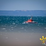 Leucate_April_2014-6
